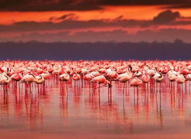 Viajes Islas del Índico, Isla Mauricio y Kenia 2019-2020: Safari en Kenia y Mauricio