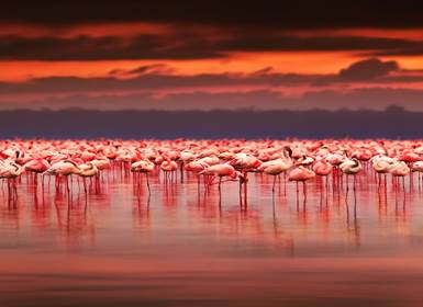 Viajes Islas del Índico, Kenia e Isla Mauricio 2019-2020: Combinado Safari en Kenia y Mauricio