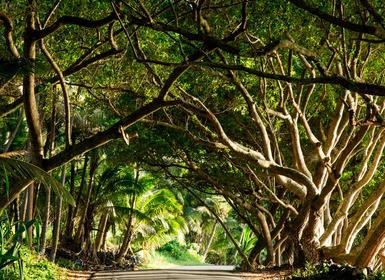 Viajes Hawái 2019: Ruta hawaiana
