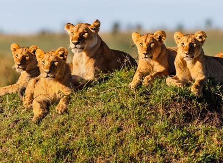 Viajes Kenia 2019-2020: Safari en Kenia con Masai Mara y Amboseli